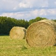 Hay — Stock Photo #1274825