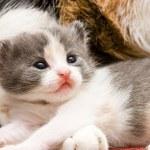 Kitten — Stock Photo #1275496