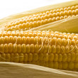 Stock Photo: Golden corn