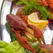 Crawfish — Stock Photo #1276124