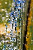 Wody — Zdjęcie stockowe