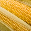 Golden corn — Stock Photo #1291530