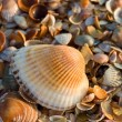 Sea-shell texture — Stock Photo