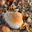 Stock Photo: Sea-shell texture