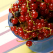 Currant — Stock Photo #1295248