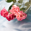 Fragility roses — Stock Photo
