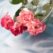 Stock Photo: Fragility roses