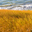 Steppe and sea — Stock Photo