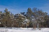 Winter landscape — Стоковое фото
