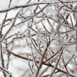 Frozen twig — Stock Photo