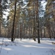 Winter forest — Stock Photo #1309906