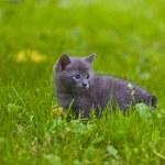 Kitten — Stock Photo #1312884