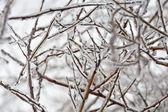 冰冻的枯枝 — 图库照片