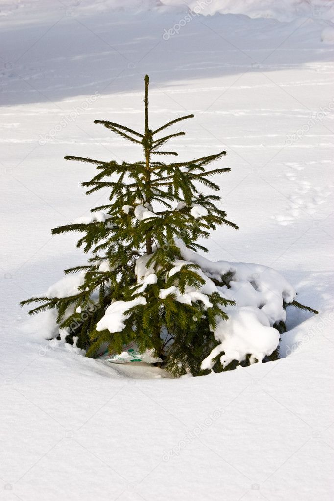Nature series: small fir tree in the white snow — Stockfoto #1311338