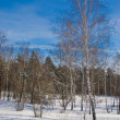 Winter landscape — Stock Photo #1320790