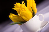 Still life with tulips — Stock Photo