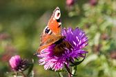Butterfly — Zdjęcie stockowe