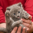 Stock Photo: Small Kitten