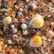 Stock Photo: Sea shell texture