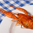 Cooked crayfish — Stock Photo