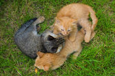 Tres gatos amigos — Foto de Stock