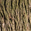 Bark — Stock Photo #1386020