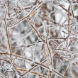 Frozen twig — Foto de stock #1386346