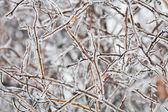 Zmrazené větvička — Stock fotografie