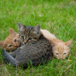 Stok fotoğraf: Three cats friends