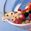 Currant — Stock Photo #1396881