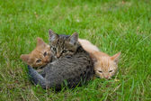 Three cats friends — Stock Photo