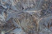 冻结的窗口 — 图库照片