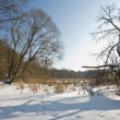 Winter landscape - Lizenzfreies Foto