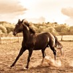 Horse — Stock Photo #1440019