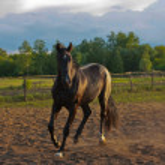 Horse — Stock Photo #1440023