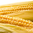 Golden corn - Stock Photo