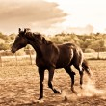 Horse — Stock Photo #1445313