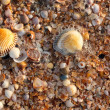 Sea shell texture - Stock Photo