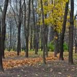 Autumn park — Stock Photo #1447366