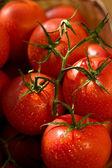 Tomato, — Stock Photo