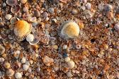 Sea shell texture — Stock Photo