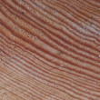 Stock Photo: Wood cut
