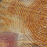 Wood cut — Stock Photo