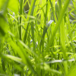Grass — Stock Photo #1454168