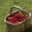 Cornelian cherries — Stock Photo #1456995