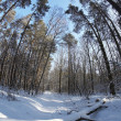 Wintry forest — Stock Photo