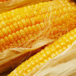 Golden corn — Stock Photo #1458268