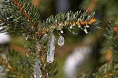 Frozen drop — Stock Photo