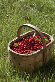 Cornelian cherries — Stock Photo