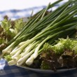 Spring onions — Stock Photo